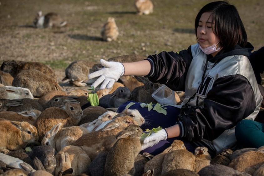 بلدة تسكنها الأرانب فقط