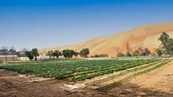 الإمارات تحتفي بجهودها في مكافحة التصحر